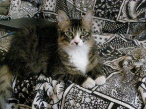 שניצל חתולה של יותם ורביד